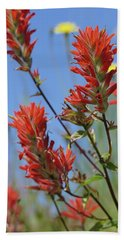 Scarlet Indian Paintbrush At Mount St. Helens National Volcanic  Beach Towel