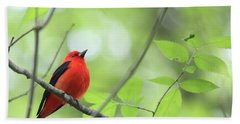 Scarlet Tanager Beach Towel