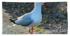 Seagull On The Breakwall Beach Towel