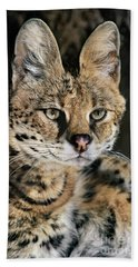 Serval Portrait Wildlife Rescue Beach Towel