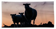 Beach Towel featuring the photograph Sheep Family by Anjo Ten Kate