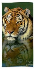 Beach Towel featuring the photograph Siberian Tiger Reflection Wildlife Rescue by Dave Welling