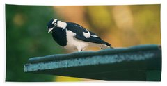 Small Magpie Lark Outside In The Afternoon Beach Towel