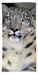 Snow Leopard Portrait Endangered Species Wildlife Rescue Beach Towel