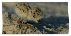 Snowy Plover On The Hunt Beach Towel