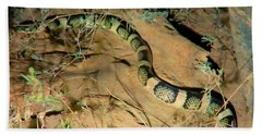 Beach Towel featuring the photograph Sonoran Desert Longnosed Snake Vintage by Judy Kennedy