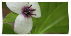 Southern Nodding Trillium 1 Beach Sheet
