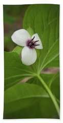 Southern Nodding Trillium 2 Beach Sheet
