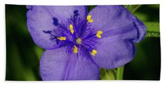 Spiderwort Flower Beach Towel