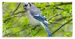 Springtime Bluejay Beach Towel