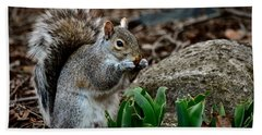 Squirrel And His Dinner Beach Towel