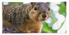 Squirrel Close Up Beach Towel