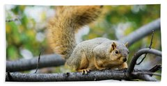 Squirrel Crouching On Tree Limb Beach Towel