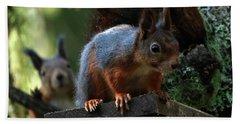 Squirrels Beach Towel