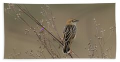 Stout Cisticola Beach Towel