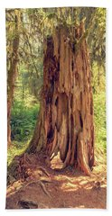 Stump In The Rainforest Beach Towel