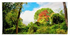 Sugar Maple Stands Out In Early Fall Beach Towel