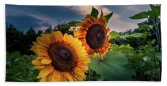 Sunflowers In Evening Beach Towel