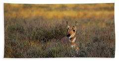 Beach Towel featuring the photograph Sunset Pronghorn by Pete Federico