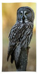 The Great Gray Owl In The Morning Beach Towel