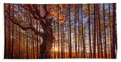 The King Of The Trees Beach Towel