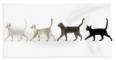 Beach Towel featuring the photograph The Kits Parade - Four by Warren Photographic