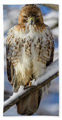 The Look, Red Tailed Hawk 1 Beach Towel