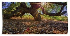 Beach Towel featuring the photograph The Old Oak by John Rodrigues