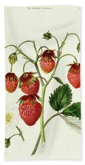 The Roseberry Strawberry, Engraved By Watte Beach Towel
