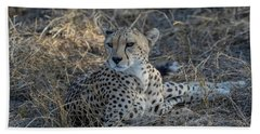 Cheetah In Repose Beach Towel