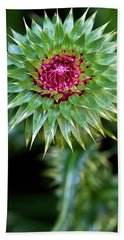 Beach Towel featuring the photograph Thistle Bloom by Robert FERD Frank