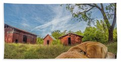 Beach Towel featuring the photograph Thornburg Barns By Photo Dog Jackson by Matthew Irvin