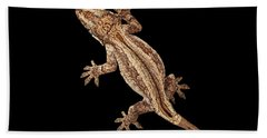 Top View Of Gargoyle Gecko, Rhacodactylus Auriculatus Staring Isolated On Black Background. Native T Beach Towel