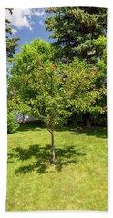 Tree In The Garden Beach Towel