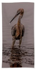 Tri Colored Heron Beach Towel