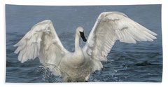 Beach Towel featuring the photograph Trumpeter Swan Splash by Patti Deters