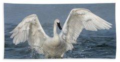 Trumpeter Swan Splash Beach Sheet