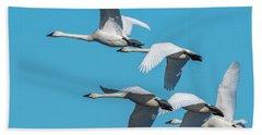 Tundra Swans In Flight Beach Sheet