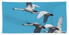 Tundra Swans In Flight Beach Towel