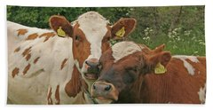 Beach Towel featuring the photograph Two Cows by PJ Boylan