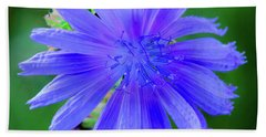 Vibrant Blue Chicory Blossom Close-up With Its Delicate Petals And Stamen Beach Towel