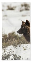 Beach Towel featuring the photograph W11 by Joshua Able's Wildlife