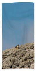 Beach Towel featuring the photograph W24 by Joshua Able's Wildlife