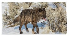 Beach Towel featuring the photograph W28 by Joshua Able's Wildlife