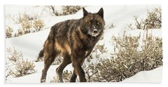 Beach Towel featuring the photograph W38 by Joshua Able's Wildlife