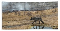 Beach Towel featuring the photograph W53 by Joshua Able's Wildlife
