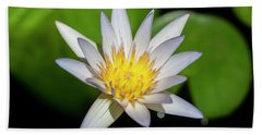 Water Lily 102 Beach Towel