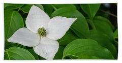 White Dogwood Flower  Beach Towel