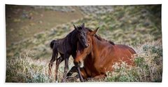 Wild Black New Born Foal And Mare Beach Sheet