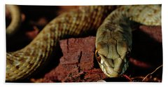 Wild Snake Malpolon Monspessulanus In A Tree Trunk Beach Sheet
